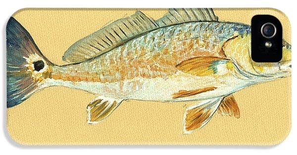 Redfish Painting IPhone 5 / 5s Case by Juan  Bosco