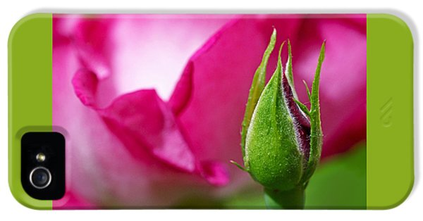 Budding Rose IPhone 5 Case
