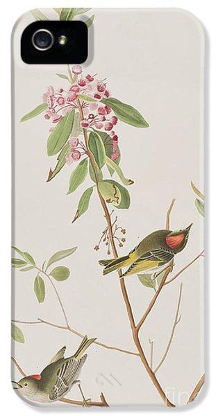 Ruby Crowned Wren IPhone 5 Case by John James Audubon