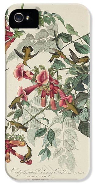 Ruby-throated Hummingbird IPhone 5 Case by Dreyer Wildlife Print Collections