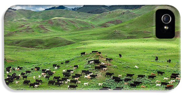 Cow iPhone 5 Case - Salt And Pepper Pasture by Todd Klassy