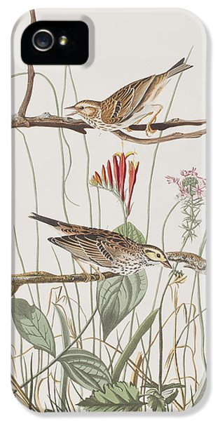 Savannah Finch IPhone 5 Case by John James Audubon