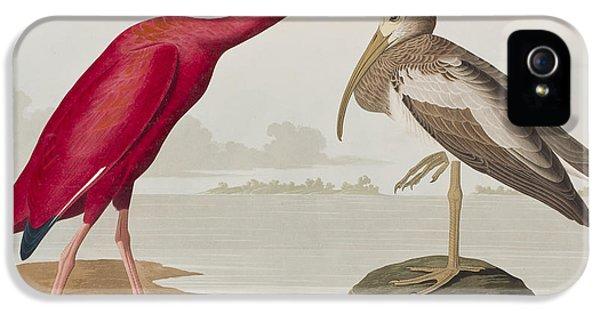 Scarlet Ibis IPhone 5 Case by John James Audubon