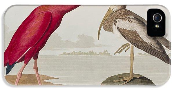 Scarlet Ibis IPhone 5 / 5s Case by John James Audubon