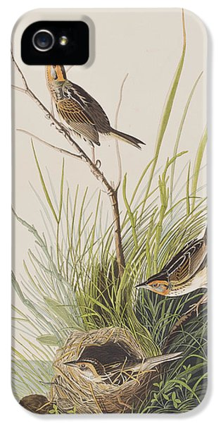 Sharp Tailed Finch IPhone 5 Case by John James Audubon