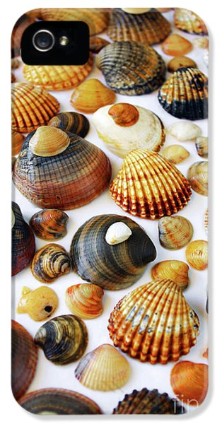 Shell Background IPhone 5 Case by Carlos Caetano