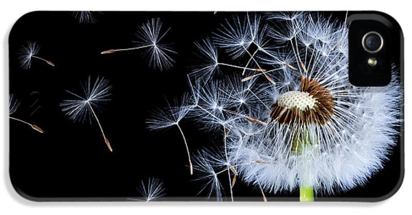 Silhouettes Of Dandelions IPhone 5 Case by Bess Hamiti