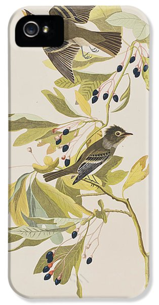 Small Green Crested Flycatcher IPhone 5 Case by John James Audubon