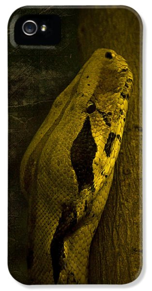 Garden Snake iPhone 5 Case - Snake by Svetlana Sewell