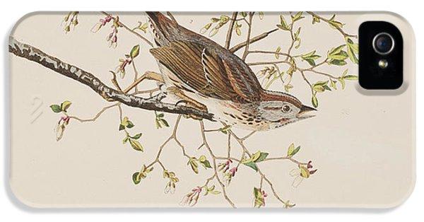 Song Sparrow IPhone 5 / 5s Case by John James Audubon