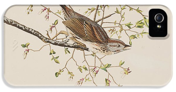 Song Sparrow IPhone 5 Case