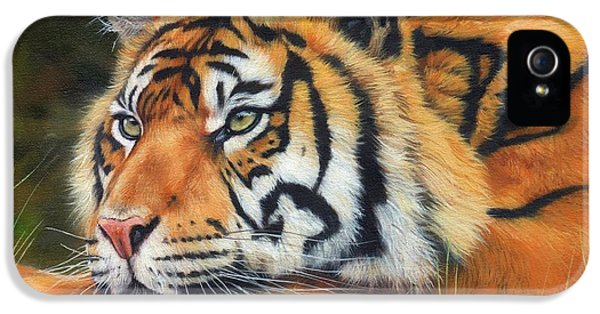 Sumatran Tiger  IPhone 5 Case