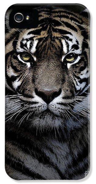 Sumatran Tiger IPhone 5 Case by Avalon Fine Art Photography