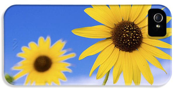 Sunflower iPhone 5 Case - Sunshine by Chad Dutson