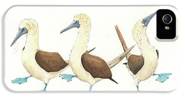 Three Blue Footed Boobies IPhone 5 Case by Juan Bosco