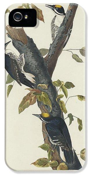 Three-toed Woodpecker IPhone 5 Case