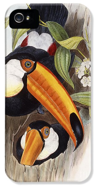 Toucan IPhone 5 Case by John Gould