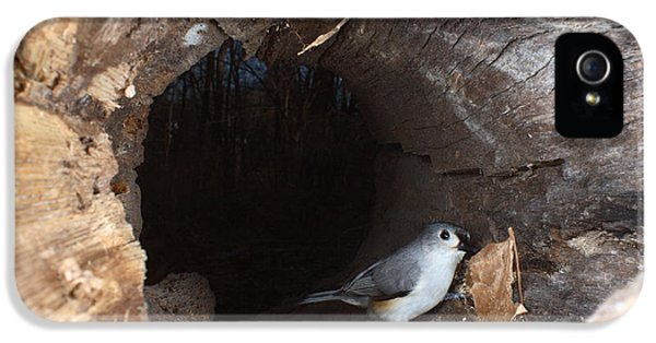 Tufted Titmouse In A Log IPhone 5 Case by Ted Kinsman