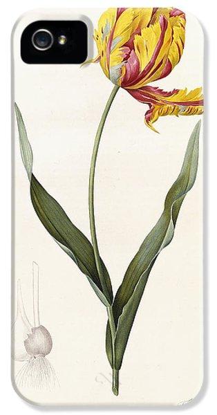 Tulip IPhone 5 Case by Pierre Joseph Redoute