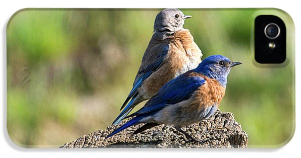 Western Bluebird Pair IPhone 5 Case