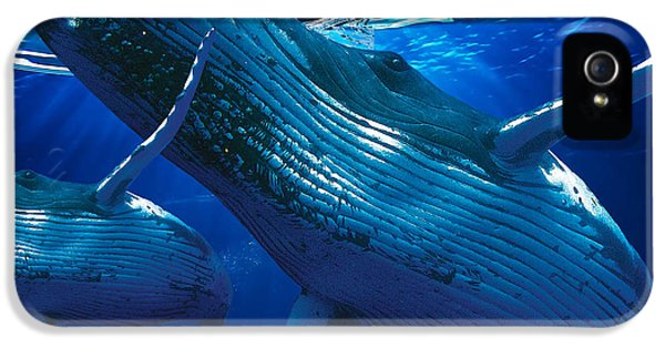 Whale Watching Art IPhone 5 Case