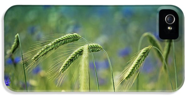 Wheat And Corn Flowers IPhone 5 Case