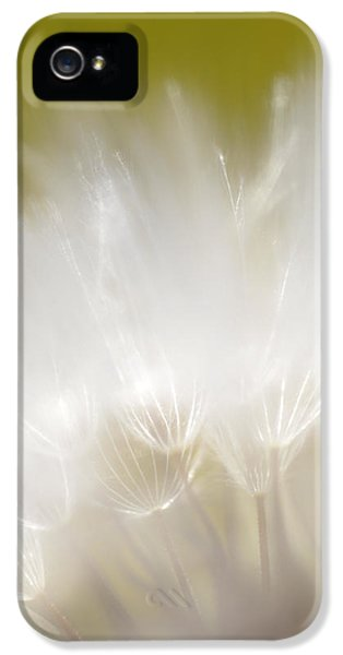 White Blossom 1 IPhone 5 Case by Dubi Roman