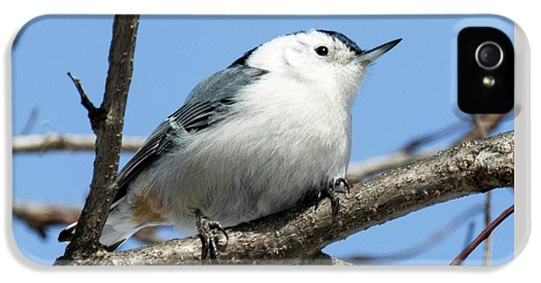 White-breasted Nuthatch IPhone 5 Case by Ricky L Jones