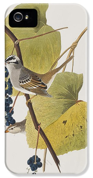 White-crowned Sparrow IPhone 5 Case by John James Audubon