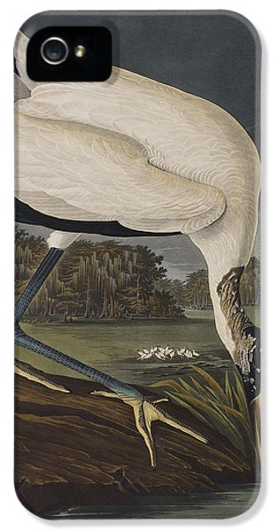 Ibis iPhone 5 Case - Wood Ibis by John James Audubon