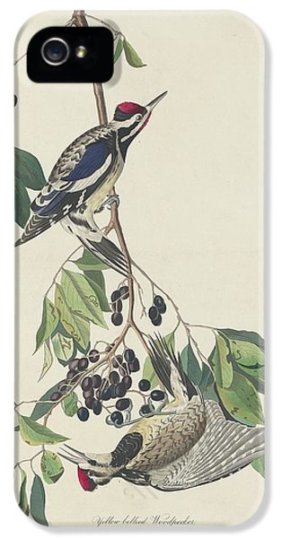 Yellow-bellied Woodpecker IPhone 5 / 5s Case by John James Audubon