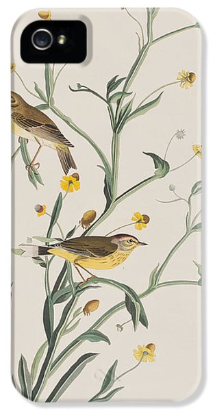 Yellow Red-poll Warbler IPhone 5 Case by John James Audubon