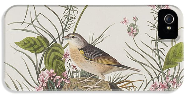 Yellow-winged Sparrow IPhone 5 Case