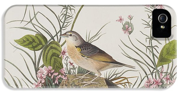 Yellow-winged Sparrow IPhone 5 Case by John James Audubon
