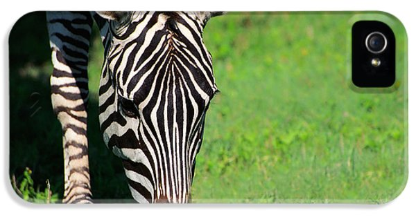 Zebra IPhone 5 Case by Sebastian Musial