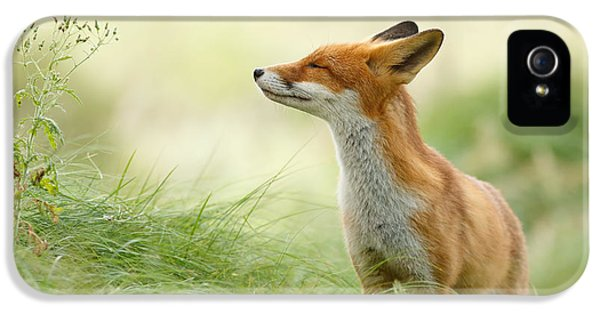 Zen Fox Series - Zen Fox IPhone 5 Case by Roeselien Raimond