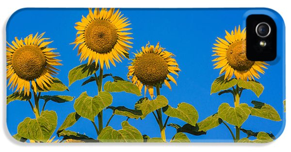 Sunflower iPhone 5 Case - Field Of Sunflowers by Bernard Jaubert