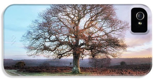 New Forest - England IPhone 5 Case by Joana Kruse