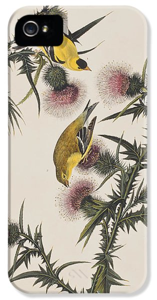 American Goldfinch IPhone 5 / 5s Case by John James Audubon