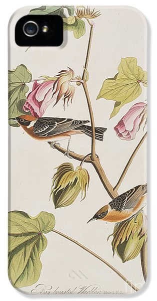 Bay Breasted Warbler IPhone 5 Case by John James Audubon