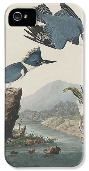 Belted Kingfisher IPhone 5 Case by Rob Dreyer