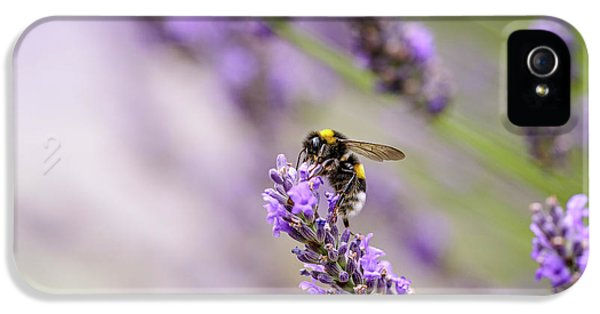 Bumblebee And Lavender IPhone 5 Case by Nailia Schwarz