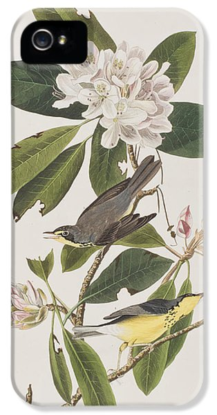Canada Warbler IPhone 5 Case by John James Audubon
