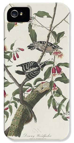 Downy Woodpecker IPhone 5 Case
