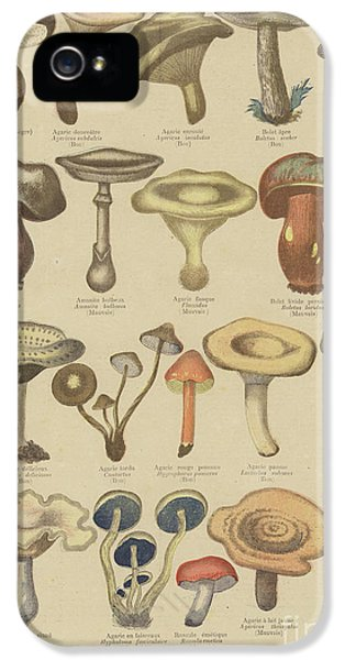 Edible And Poisonous Mushrooms IPhone 5 Case by French School