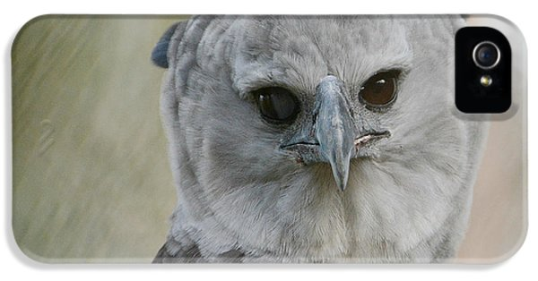 Harpy Eagle iPhone 5 Case - Eye Contact by Fraida Gutovich