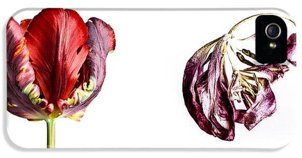 Tulip iPhone 5 Case - Fading Beauty by Nailia Schwarz