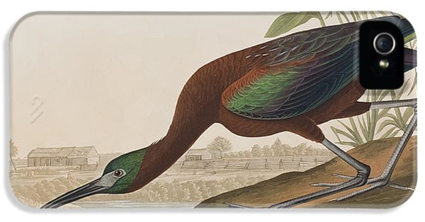 Glossy Ibis IPhone 5 / 5s Case by John James Audubon
