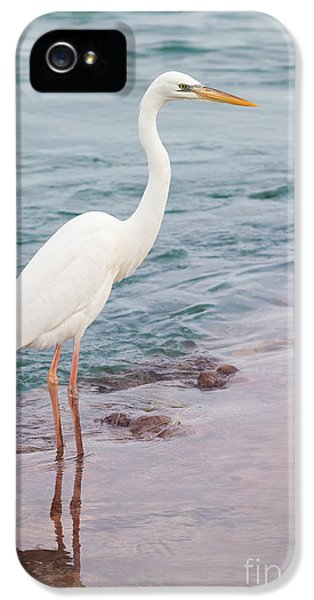 Great White Heron IPhone 5 Case by Elena Elisseeva