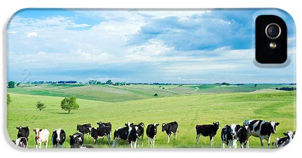 Cow iPhone 5 Case - Happy Cows by Todd Klassy